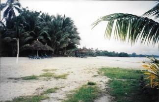 z961228 Coconuts Beach 3 (2)